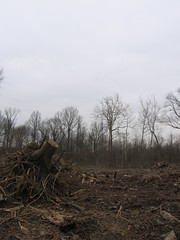 Nature Doesn't Live Here Anymore (Some Kind of Truth) Tags: trees nature trash aftermath construction treasure indianapolis reserve indiana ground landmark location soil human stump land carnage value development improvement devastation conserve disregard oneofthelast