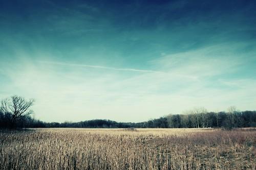 prairie under the blue sky