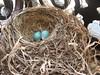 Nest: April 24
