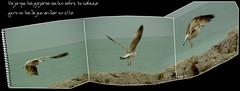 aire! (cortu) Tags: ricardo f5 gaviota cantabria pjarosenlacabeza