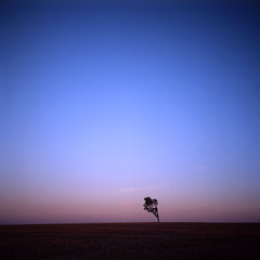 the ruined map (memetic) Tags: pink blue sunset sky tree 120 6x6 rolleiflex mediumformat countryside solitude kodak empty australia victoria lone superfantastique solitary 30x30 35e e100g