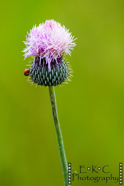 flower w ladybug wm