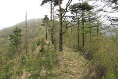 棚の入山と赤鞍ヶ岳の間の稜線の道