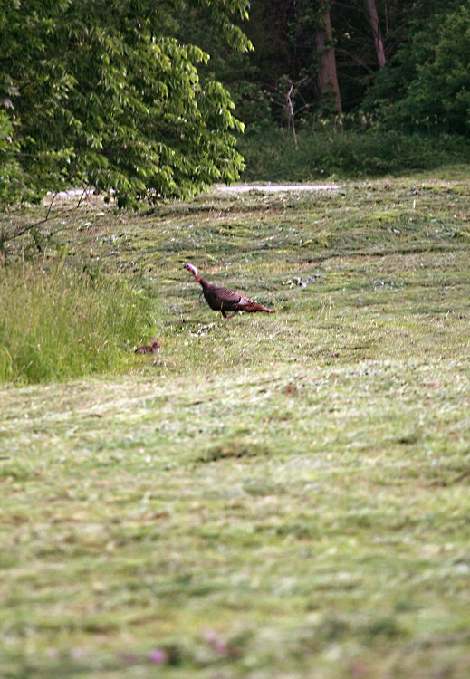 06-06-turkey