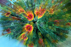 Minimal effect (ScreaminScott) Tags: flowers abstract colorful vivid creativephoto firewheels passionphotography zoomingduringexposure