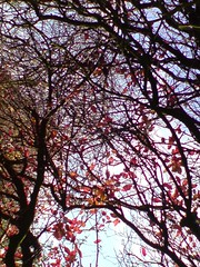 Autumn Leaves II (farmerytwang) Tags: cameraphone eastleigh flemingpark k850i