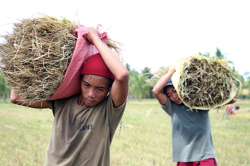 Philippines,Pinoy,Life,city,rural Alabel, Sarangani rural rice man young farm farming harvest