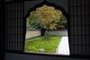 Kyoto Nov 2007 (meguropolitan) Tags: japan kyoto 京都 kitaku daitokuji 大徳寺 北区 murasakino 紫野 黄梅院 obaiin 花頭窓