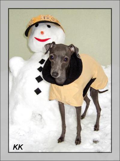 17-11-07 28 Italian Greyhound im Schnee