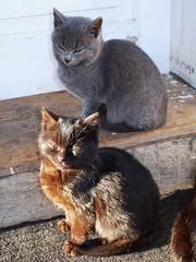 Black in the sun, Grey in the shadow (grad dana) Tags: cats black animals cat grey kitten feline chat kittens animale gri pisici blueribbonwinner pisica negru impressedbeauty