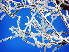 freezin life (B75 - Balkan Record) Tags: romania neamt nature tree sky blue white snow winter magic detail ice naturessilhouettes lv flickr keep 2019