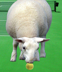The Sheep That Ate Tennis