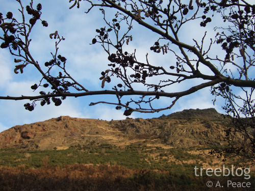 alder silhouetted above Arthur's Seat