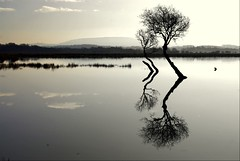 Priceless Scotland (Nicolas Valentin) Tags: hello reflection tree nature scotland bravo scenery stunning flyfishing portfolio lochlomond pikefishing themoulinrouge firstquality feb2008 flickrsbest whataplace mywinners abigfave vision1000 superaplus aplusphoto 4lb diamondclassphotographer challengegamewinner 1nv vision100