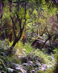 hdr rainforest walk 2