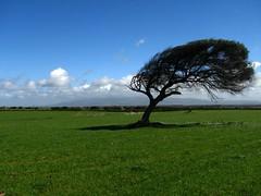 E il vento soffia... (Stranju) Tags: sardegna county italy grass italia sardinia campagna erba cielo lard albero coutry guspini canoniani