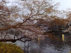 29032008180 (mwitting) Tags: japan tokyo sakura kichijoji hanami kirschbluete