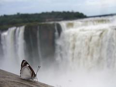 Iguazu - parc - chute d'eau - gargantua - papillon