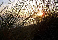 sundown behind gras
