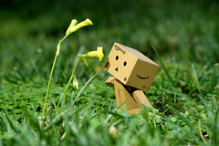 Stop and smell the flowers. (thinduck42) Tags: danbo danboard toy actionfigure panasonic fz1000 flower dmwfl360l outdoor grass macro