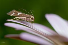 DSC_0055 (Cristo Bolaos) Tags: flower macro bug petals nikon focus wind tripod flor hard viento bicho tamron90mm ptalos trpode enfoque pajarita complicado nikond40 hardwindyday