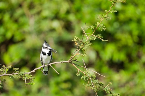 RYALE_Rwanda_Uganda_Safari-219