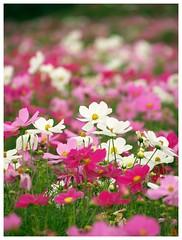 Flowers 071013 #01