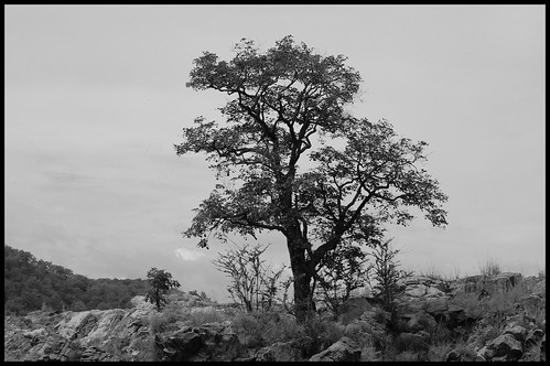 LonelyTree1