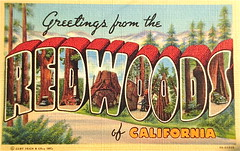 Greetings from the Redwoods of California postcard. (Smaddy) Tags: california ca tree pine forest 1930s branch linen postcard evergreen trunk redwood 1939 bigletter greetingsfrom largeletter curtteich ctartcolortone