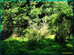 Claro en el Bosque / A clear in the forest (Claudio.Ar) Tags: claro wood trees light naturaleza santafe tree verde green luz nature argentina beauty rboles sony clear bosque rbol dsc belleza h9 smrgsbord cruzadas thebiggestgroup mywinners diamondclassphotographer flickrdiamond top20greenish claudioar claudiomufarrege