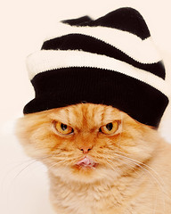 Garfi-Persian cat with hat (E.L.A) Tags: family portrait orange pet pets cute nature hat fashion animal vertical closeup cat cutout fur fun photography persian clothing paw orangecat kitten feline funny humor fluffy ab kittens nopeople whitebackground whisker kitties studioshot knithat domesticanimals garfield gatto licking striped domesticcat kedi gettyimages frontview persiancat garfi oneanimal colorimage lookingatcamera animalhead animalthemes animalhair bestcatphotos march2011 animalbodypart differentcatbreeds