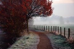The Last Autumn Colors (buteijn) Tags: rhijnauwen ochtendmist splendiferous buteijn groundmist