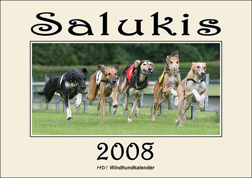 Salukis 2008 - HD! Windhundkalender
