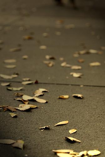 Fotografía de unas hojas otoñales caídas sobre un suelo de cemento