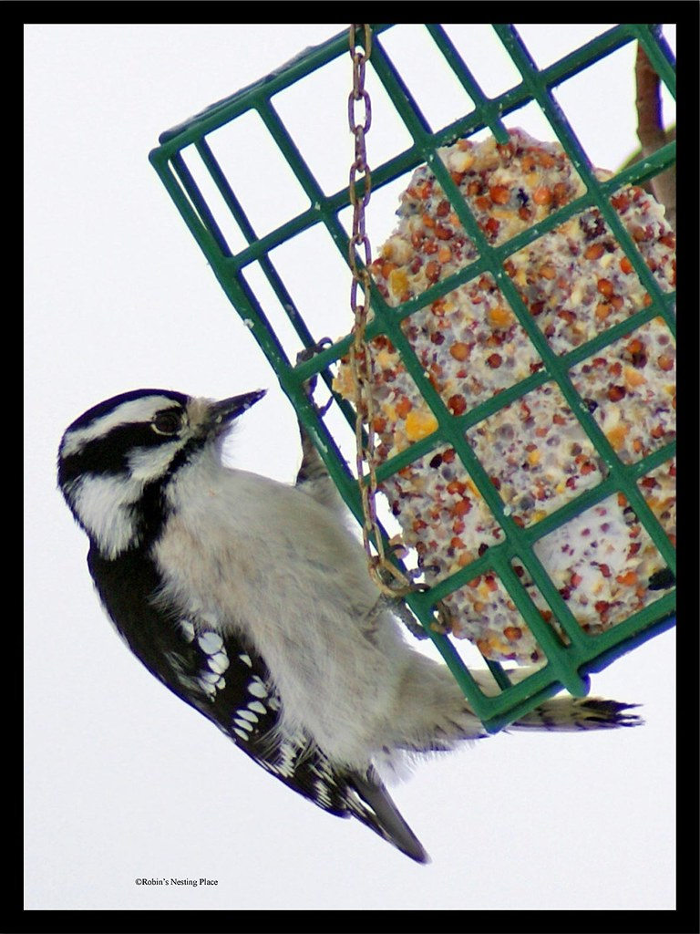 framed-woodpecker-cropped