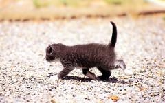 cat_3344 (gyakusan_reido) Tags: cats cat neko nya