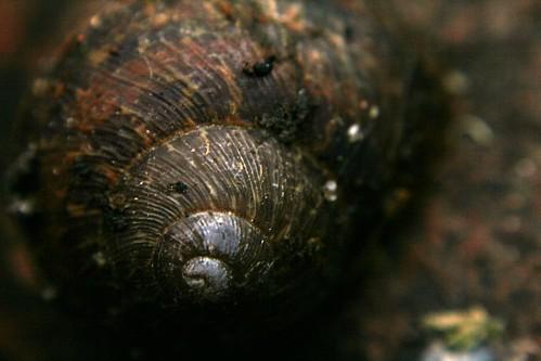 Dark dark shell