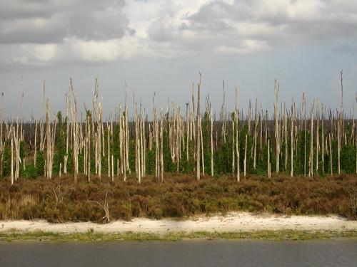 Everglades on Lake Okechobee, near Clewiston, Florida, USA