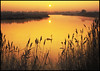 Dawning of a new year! (adrians_art) Tags: morning red orange sun nature water birds yellow sunrise reflections reeds gold dawn golden kent bravo shadows wildlife silhouettes swans rivers bexley cray magicdonkey dartord