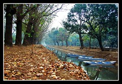 A winter morning in Lahore (Naeem Rashid) Tags: autumn trees pakistan reflection green fall nature water leaves reflections d50 boats boat canal leaf nikon punjab lahore 18200vr