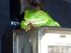 A frog in our power station of a caravan park (Uhlenhorst) Tags: travel animals tiere reisen australia australien 2007