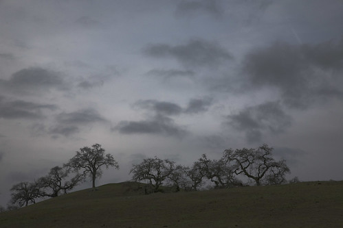 Oaks and Clouds