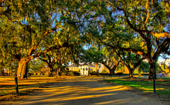 Boone Hall Plantation (Xinghua Lu,鲁兴华) Tags: hall moss oak mt dusk charleston spanish plantation boone pleasant