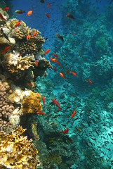 A veritable palette of colour (JotHaGie) Tags: underwater redsea egypt sharmelsheikh diving