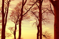 whispering trees (Tamsin Swait) Tags: lighting trees light sunset sky nature karma majestic beautifulscenery naturephotography welltaken cleevecommon aworkofart beautyofnature diamondclassphotographer flickrdiamond awesometrees oneearthonehome