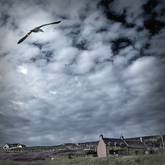 Gull over The Schoolhouse. (jimbodownie) Tags: school sun wonderful scotland seagull gull remote altandhu mywinners superbmasterpiece hourofthediamondlight