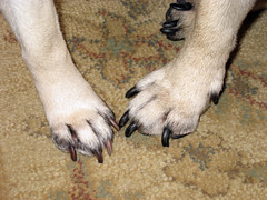 jazzy and normans paws