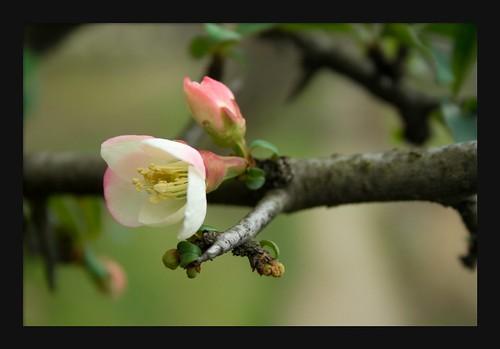 v'la l'printemps !
