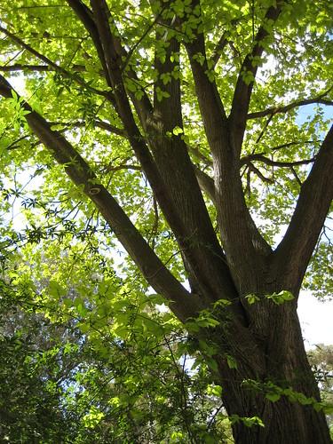 sunilight through green leaves