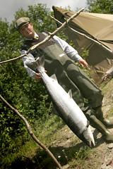 Storlaks fra Lakselv (Petter Emil) Tags: norway salmon atlantic flue flyfishing mayer kenneth laks midnightsun fiske salmonfishing lakselv midnattsol porsanger kaste